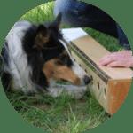 Hundeschule Bremen Objektsuche