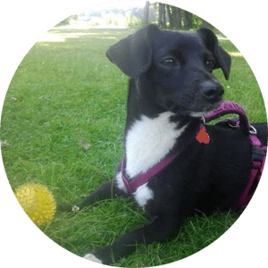 Hundetraining Bremen