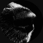 Objektsuche-Hundeschule-Bemen