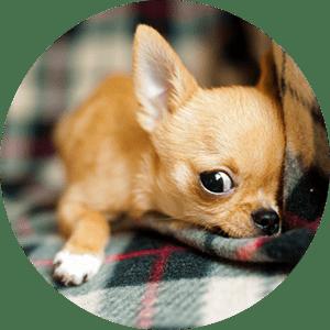 Beratung Anschaffung Hund