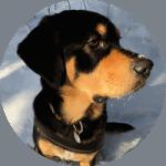 Hundeschule Einzelstunde Bewertung