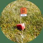 Anti-Giftköder Training Bremen