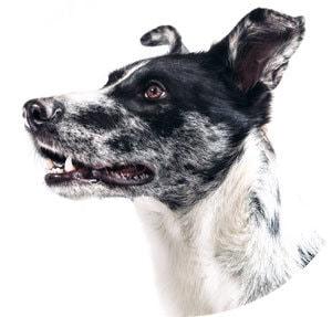 Hundetraining Bremen Einzelstunden Preise
