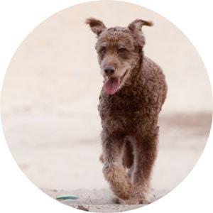 Pumba: Deshalb habe ich mich auf ängstliche Hunde spezialisiert.