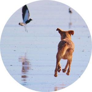 Anti-Jagd-Workshop Bremen Hundeschule
