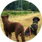 Anti-Jagd Training Hundeschule Bremen