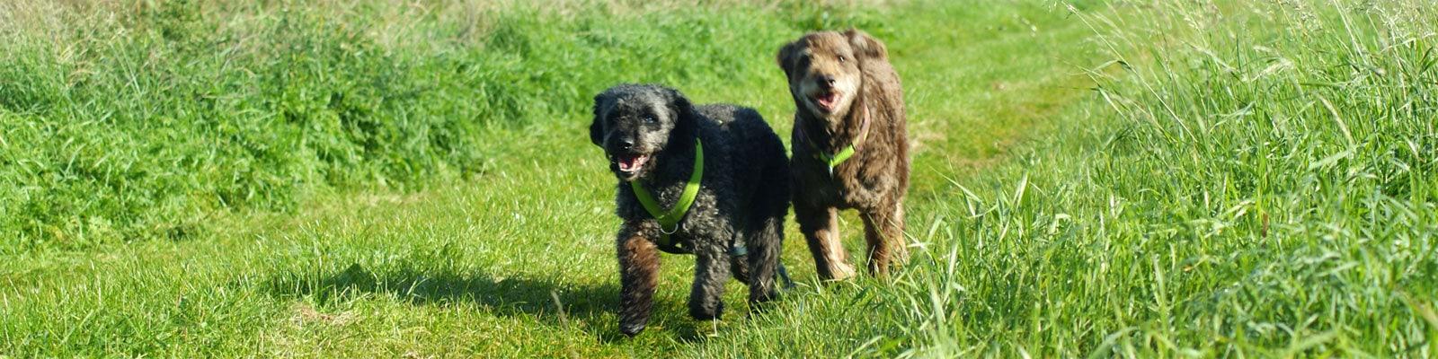Hundeschule Bremen Weser-Hunde