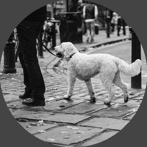 Hundeführerschein Bremen