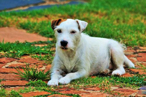 Ernährungsberatung Bremen Hund mit Allergien / Unverträglichkeiten