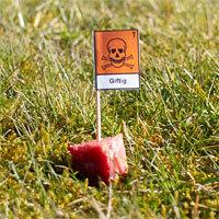 Anti-Giftköder Bremen Ritterhude Hundeschule