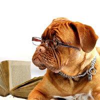 Hundeführerschein Ritterhude Hundeschule