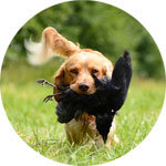Anti-Jagd Training Hundeschule Bremen OHZ