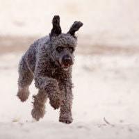 Jagdverhalten-kontrollieren-Hundetraining-Bremen