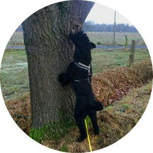 Beschäftigungs Kurs Hundeschule Ritterhude