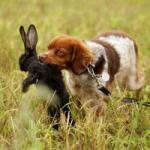 Jagdverhalten kontrollieren Bremen Hundeschule
