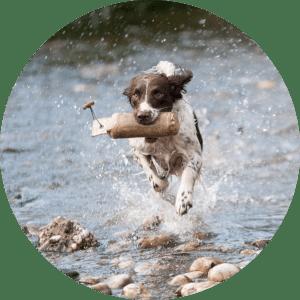 Trainingsurlaub Hundeschule Bremen