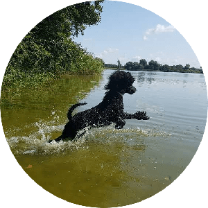 Dummytraining-Hundeschule-Bremen-Ritterhude